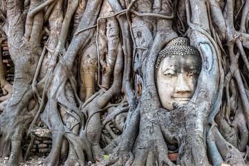 Stores photo Lieu connus d Asie Ayutthaya Head of Buddha statue