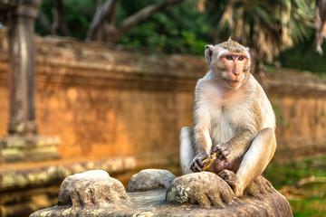 Monkey at Angkor Wat Wall mural