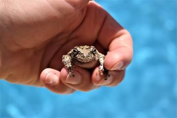 Froggy fingers