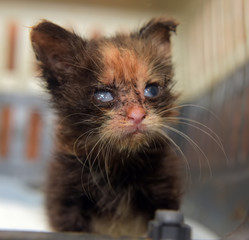 Little dirty kitten with eye disease due to infection