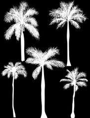 five palm silhouettes isolated on black