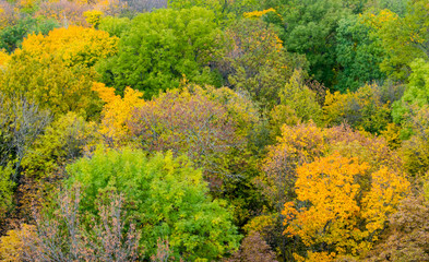 Yellow trees in autumn. View from above.