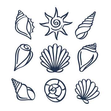 Hand drawn sea shells set. Vector illustration.
