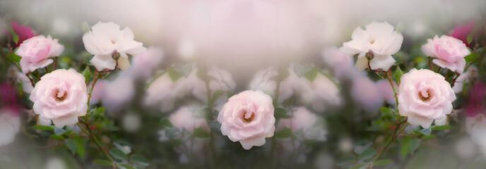 Wall Mural - Blooming pink roses flowers