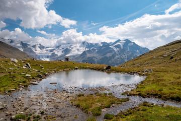 little alpine lake, Forni glacier, Stelvio National Park, Alps, Italy