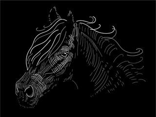 Black horse illustration. Horse drawing