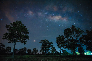 Milky Way over silhouette trees