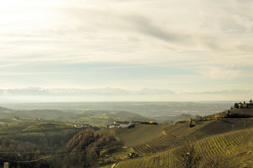 Panoramic view of the grape fields in autumn on the hills in Barolo valley