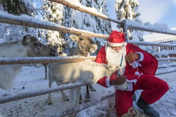 Santa Claus caresses the reindeer, Ruka (Kuusamo), Northern Ostrobothnia region, Lapland, Finland, Europe