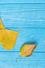 Yellow autumn leaves on a blue wooden background. Free space