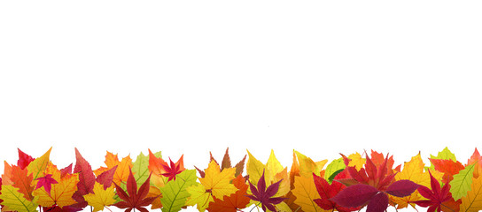 Autumn leaf banner with white backround and copy space