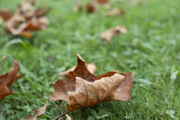 dry leaves on the grass.