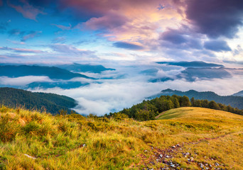 Wall Mural - Foggy summer landscape in the Carpathians