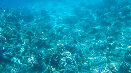 Fish and corals in the red sea in Egypt.