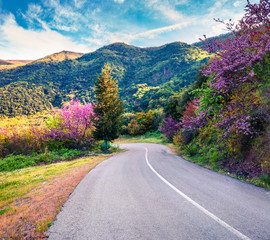Blooming cherry tree in the mountain in Greece. Colorful spring view of the countryside, Kamena Vourla location. Beauty of nature concept background. Artistic style post processed photo.