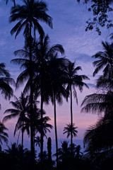 Tropical Scene with Palm Trees and a beautiful Pink Sunset