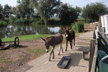 donkeys in the children farm named IJsselhage in Nieuwerkerk aan den IJssel in the Netherlands