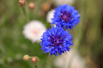 Beautiful blue flower growing in the park