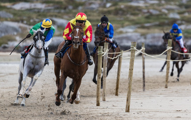 Galloping race horses and jockeys racing on the beach