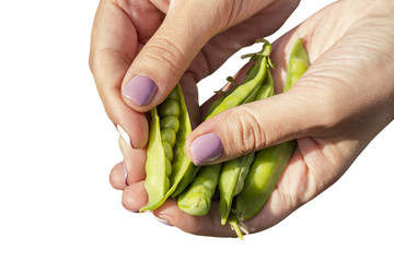 Outdoor pea pod in the hands of a girl on a white background. Isolated object