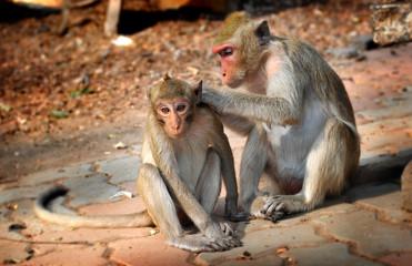 Thailand wild monkey.