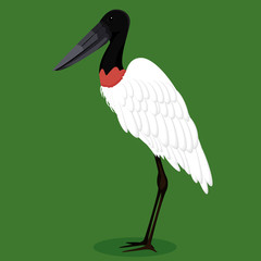 Jabiru stork cartoon bird