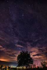 Stars over the tree