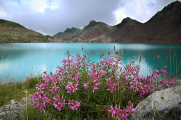Landscape with wild Alpine flowers close-up on the background of pure azure mountain lake