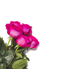 White background with five pink roses bouquet