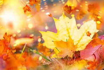 Herbstblatt Bokeh