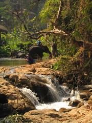Elefante asiatico en el norte de Tailandia