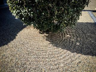 砂模様と樹木
