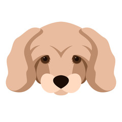 dwarf poodle dog vector illustration flat style front