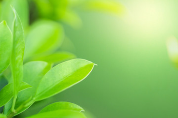 Natural background of bright green Blurred abstract style