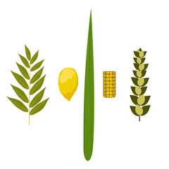 Sukkot. Judaic holiday. Traditional symbols - Etrog, lulav, hadas, arava.