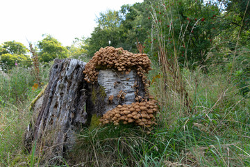 Closeup of fungi on a tree stump