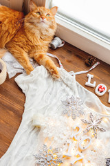 Cute ginger cat lying on wooden background with decorations. Fluffy pet helping to shoot Christmas and New Year flat lay still life backgrounds. Cozy home.