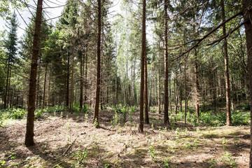 Magical Pokaini Forest