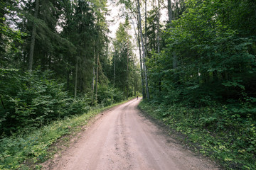 Road to Pokaini Forest