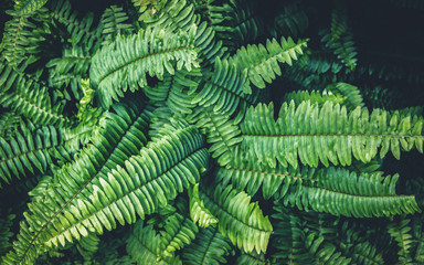 Fern green growth in the tropical forests.