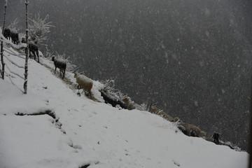 landscapes of kasol , malana , himachal pradesh , India