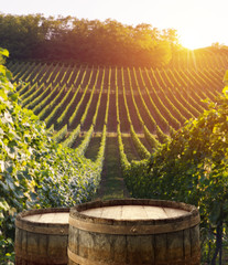 Keuken foto achterwand Wijngaard vineyard with ripe grapes in countryside at sunset
