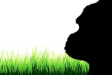 Vector silhouette of gorilla on a meadow on white background.