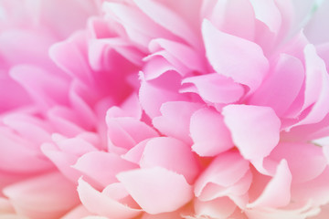 pink flowers made with color filters, soft color and blur style for background