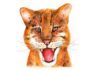 Catopuma temminckii. Watercolor illustration.
