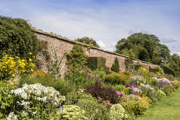 Obraz Long herbaceous border in summertime with perennial flowering plants and topiary shrubs in a walled garden. - fototapety do salonu