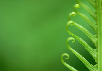 Exotic green tropical ferns with shallow depth of field (dof). Wall mural
