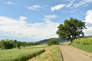 松本市中山の風景