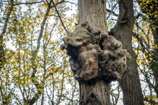 Gnarled old tree