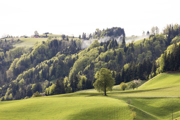 Foggy spring day in Entlebuch in the canton of Lucerne in central Switzerland